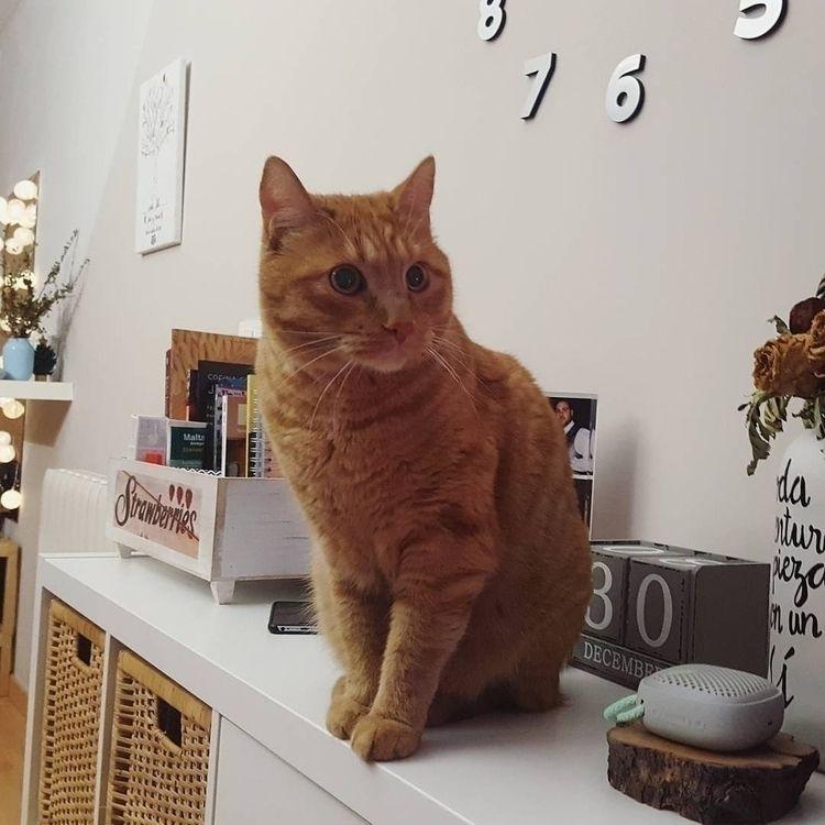 cat, garfield, home - aboutlau   ello