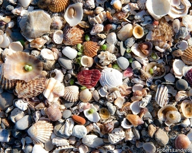 Sea shells sea shore - Mallorca - robertjlandreth | ello