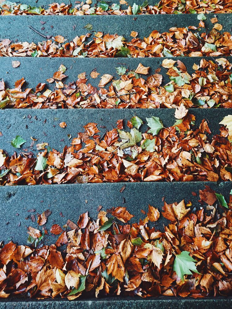 autumn, leaves, colorful - themoonlitroad | ello