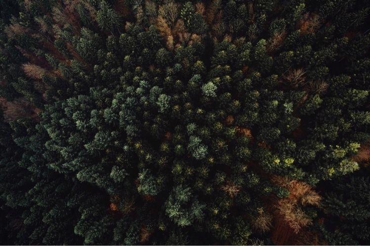 BLCKFRST :evergreen_tree:#black - pixelmaniac | ello