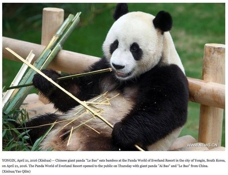 Pandas existed Korea 1. Loaner  - ccruzme   ello