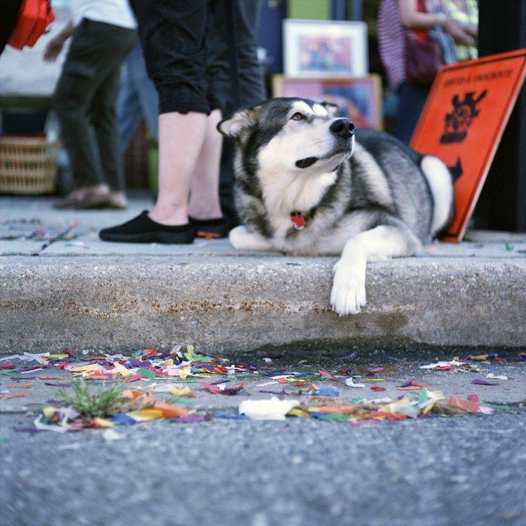 Dog Mamiya C330 Fujicolor Super - danielregner | ello