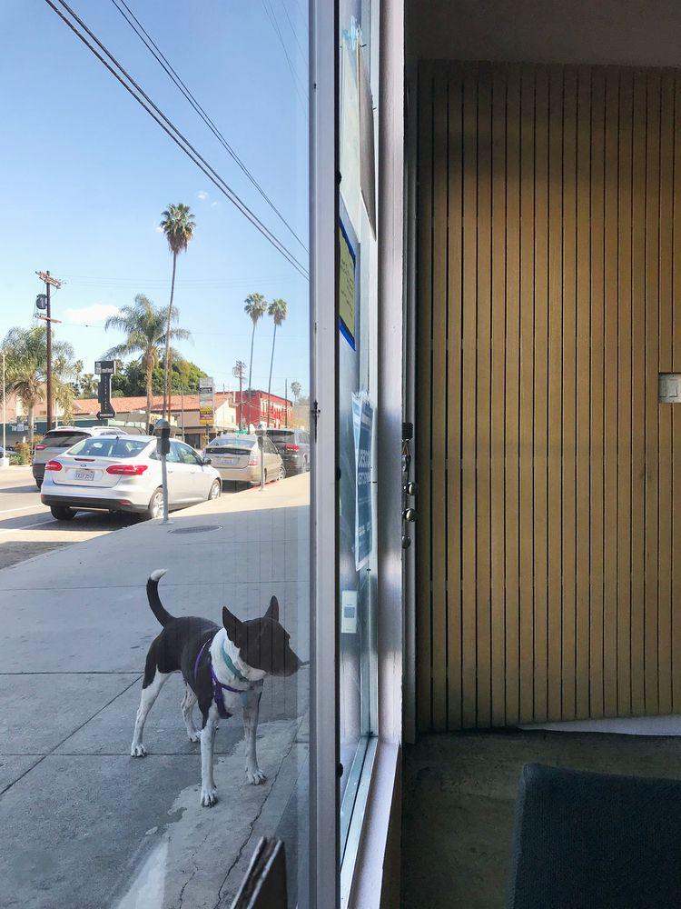Black White Dog Hogg, Silver La - odouglas | ello