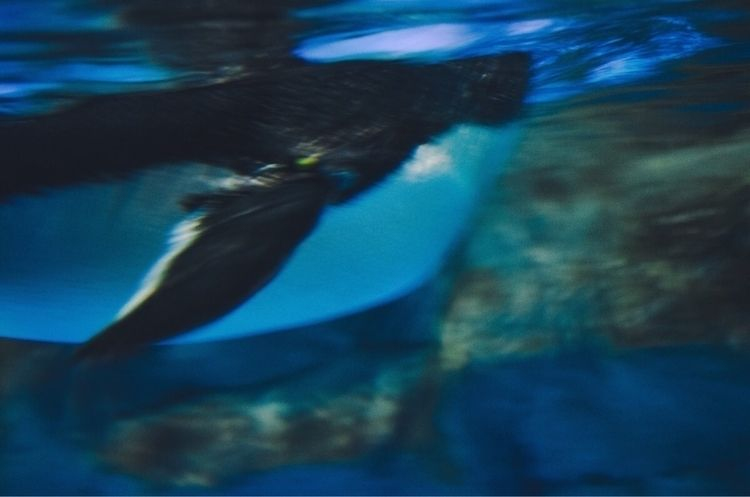 eye mind 01 - photography, sea, penguin - mikifung_ | ello
