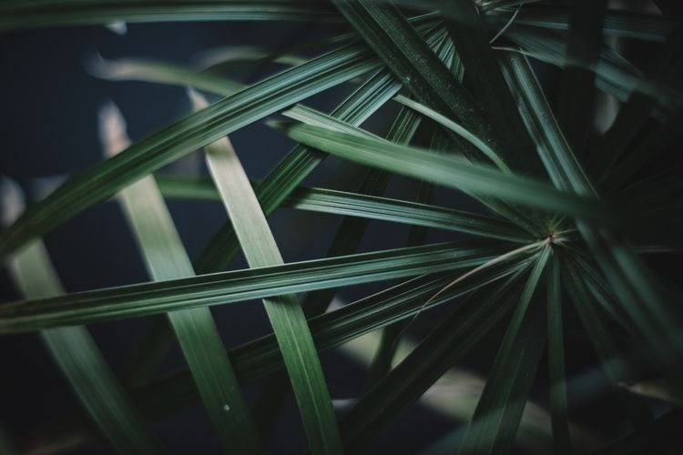 PLANT - fujifilm, photography - yooyye | ello