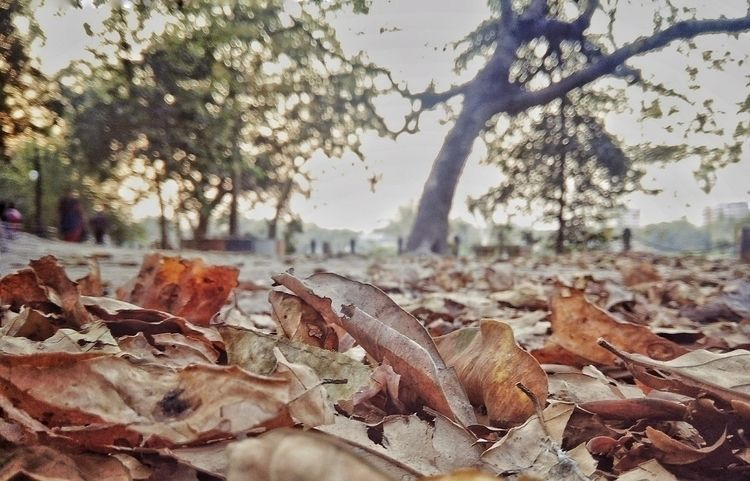 fallen leaves hide path quitely - rounak_rk | ello