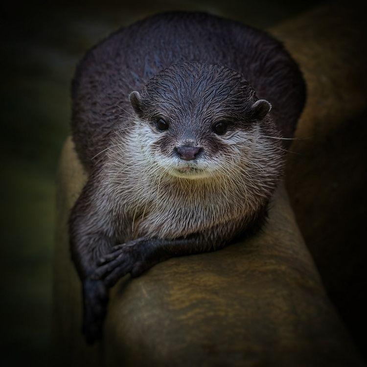 Otter - wildlife, wildlifephotography - dsandwell   ello