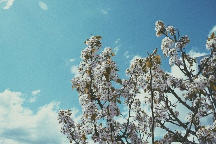 Cotton dreamin - chrisdshots | ello