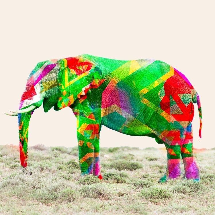 Debra. Part Kleure Van Afrika s - tassi_visual | ello