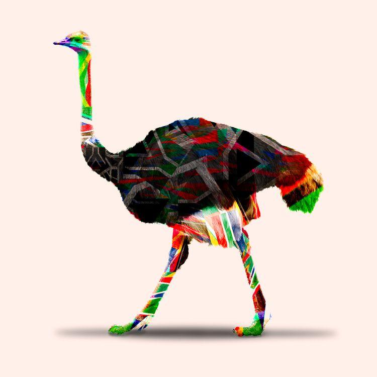 Ostrich Part Kleure Van Afrika  - tassi_visual | ello