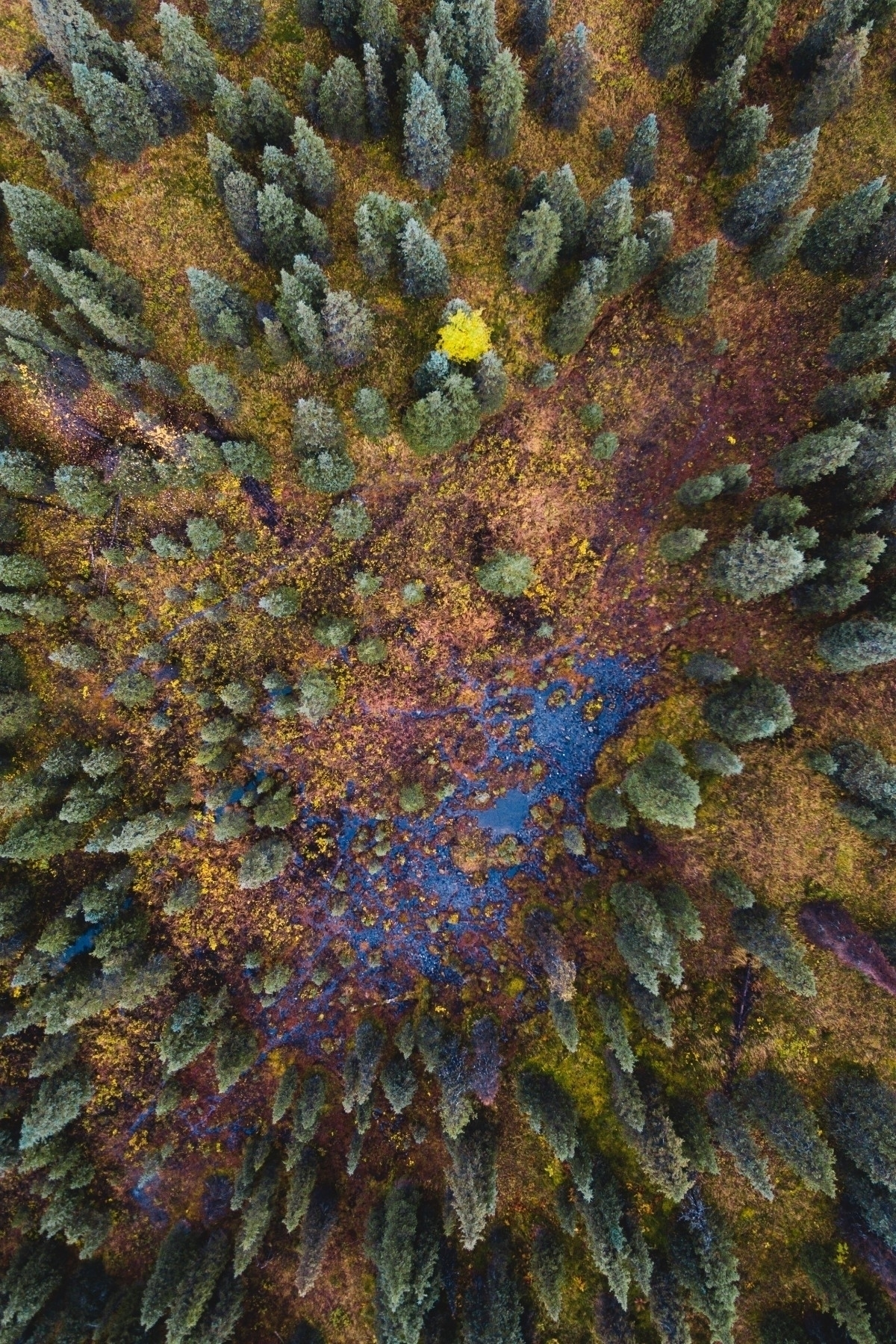 drone shots autumn Hatcher Pass - aphotosmith | ello