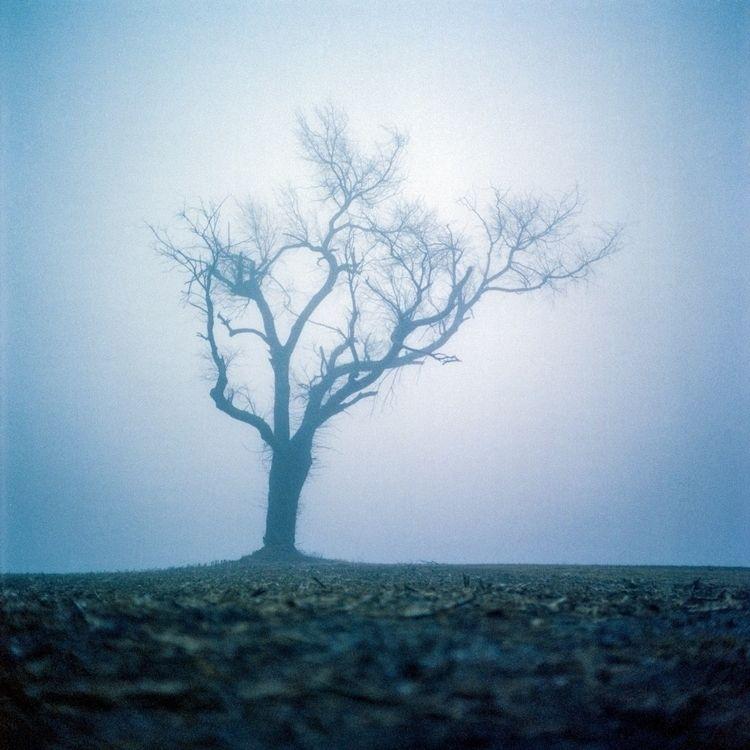 Tree Mamiya C330 Cinestill 800T - danielregner | ello