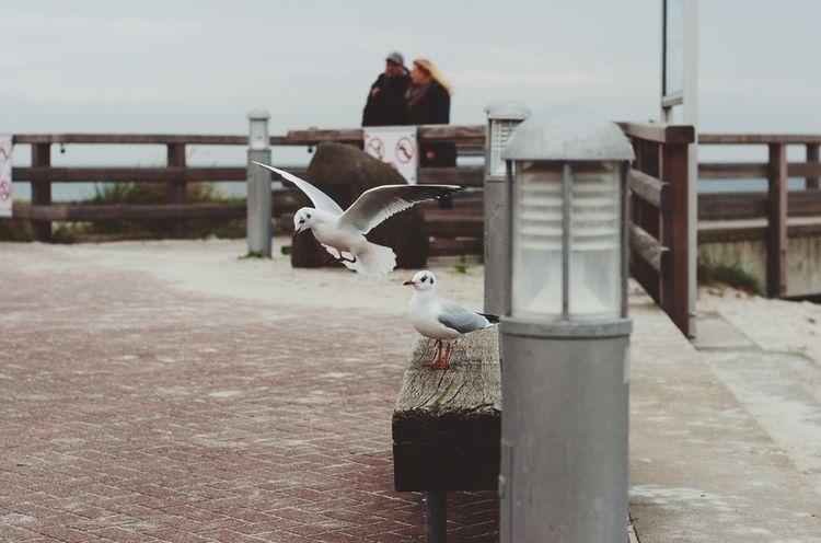 :copyright:Polaroidstern - photography - polaroidstern | ello