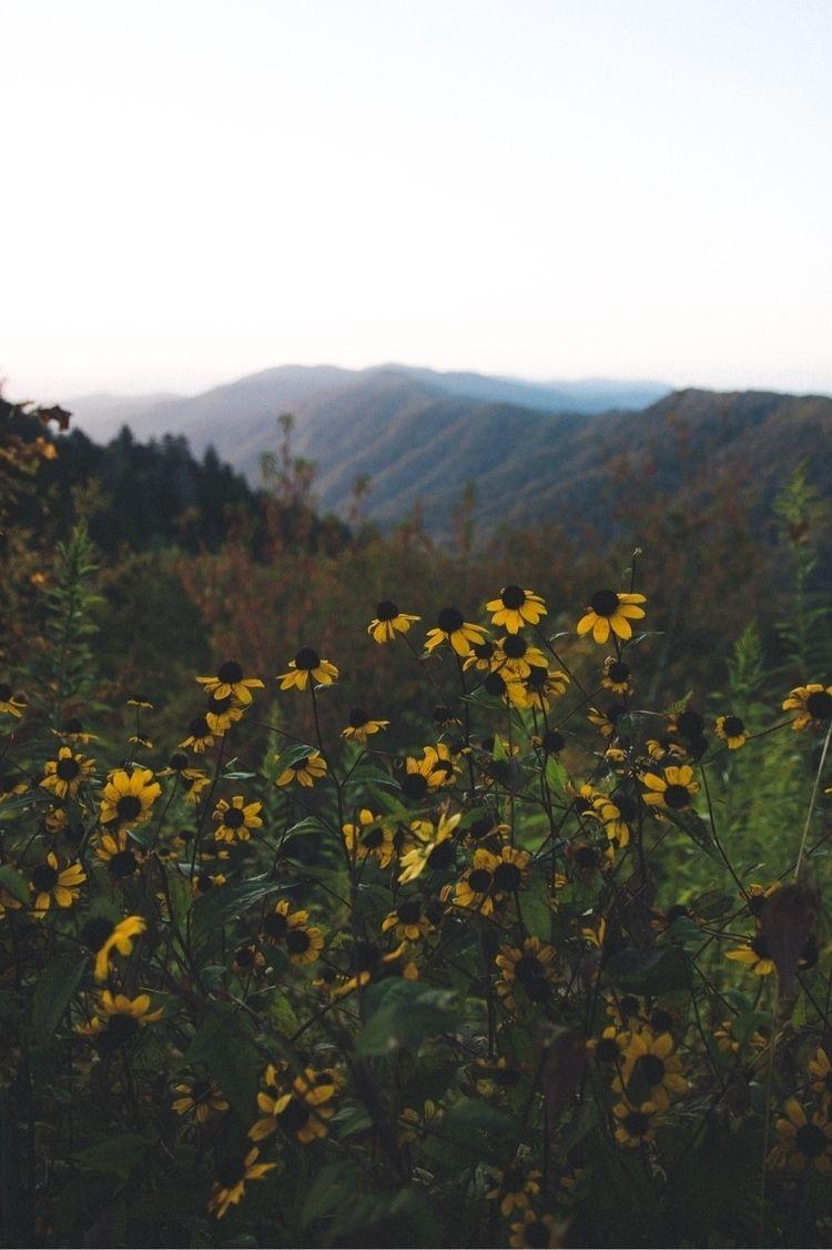 Spring flowers - wandernwill | ello
