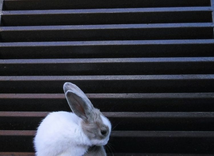 Blue - rabbit, photografy, bymariamp - mariamp | ello