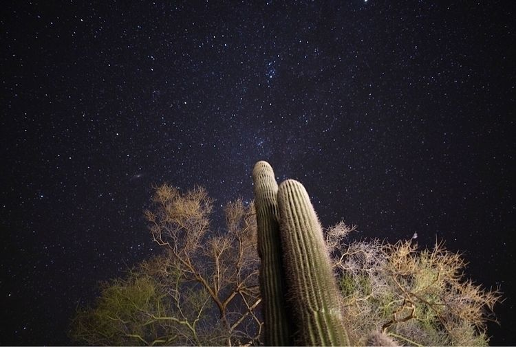 saguaro - night_photography, desert_sky - bamps | ello