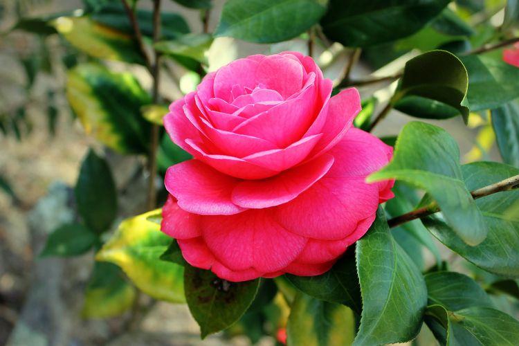 flowers, springtime, pink, landscape - anistie | ello