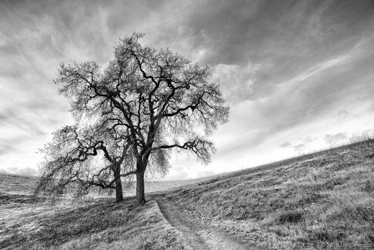 Pleasant path Northern Californ - ericseymourphotography | ello