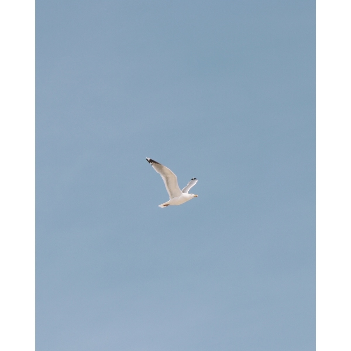 :point_up:️ seagull | - elloadventure - madebyfelix | ello