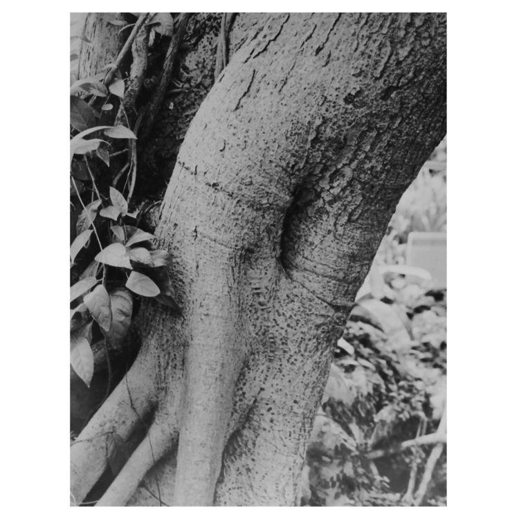 Nature Nurture Figure (detail)  - natashazeta | ello