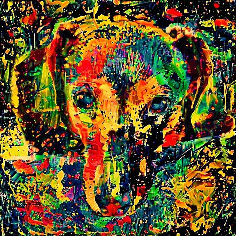 Abby - photography, dog, dachshund - kenlong | ello