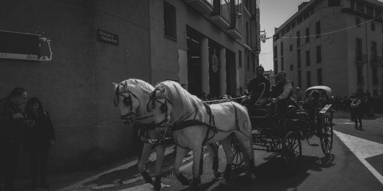 Photograph Reus (Catalonia - horse - mellamopu | ello