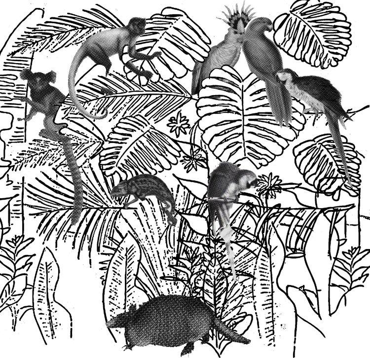 Tropicalia (boceto - design, sketch - j_r_s_ | ello