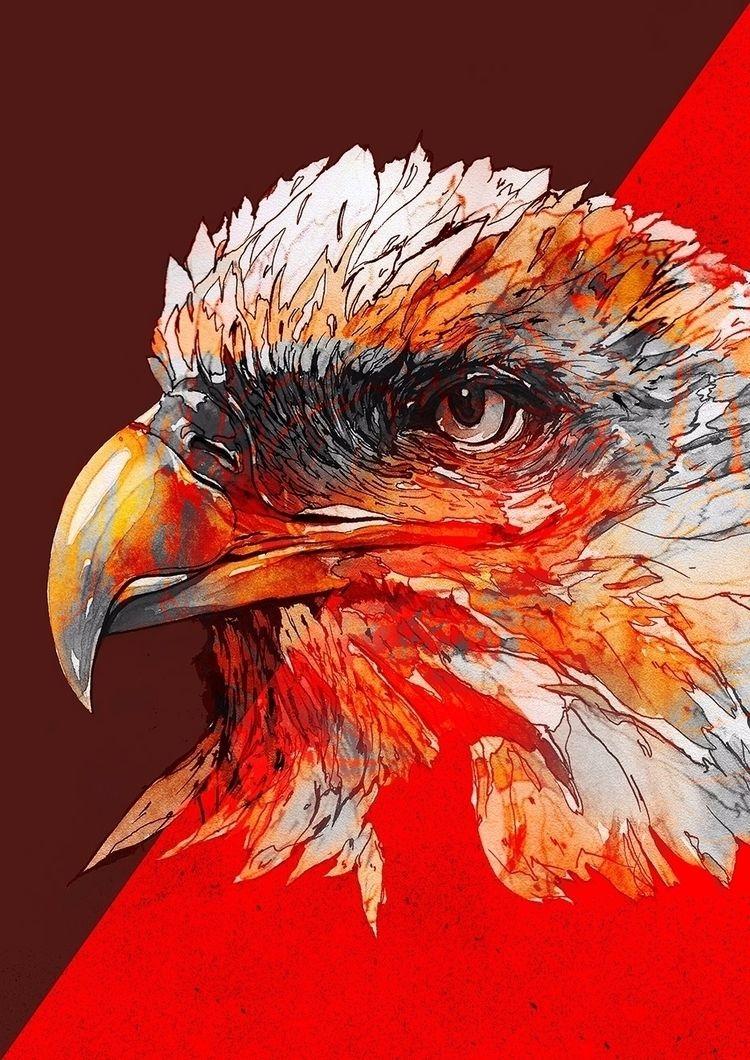 Eagle - design, illustration, art - bkzcreative   ello