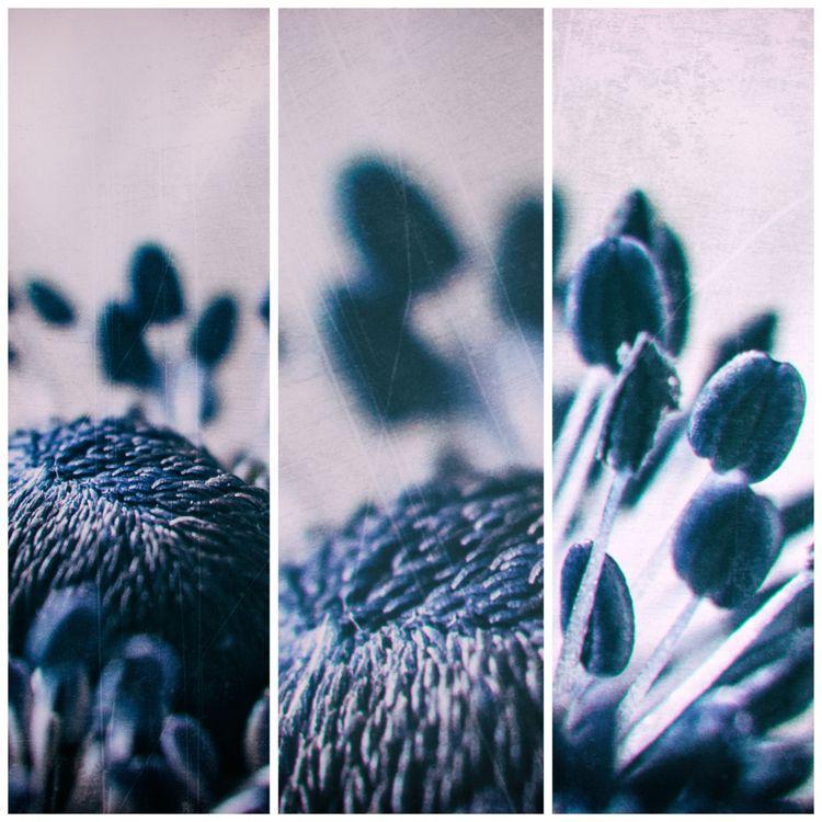 anemone - nature, natureart, botanical - peter_skoglund | ello