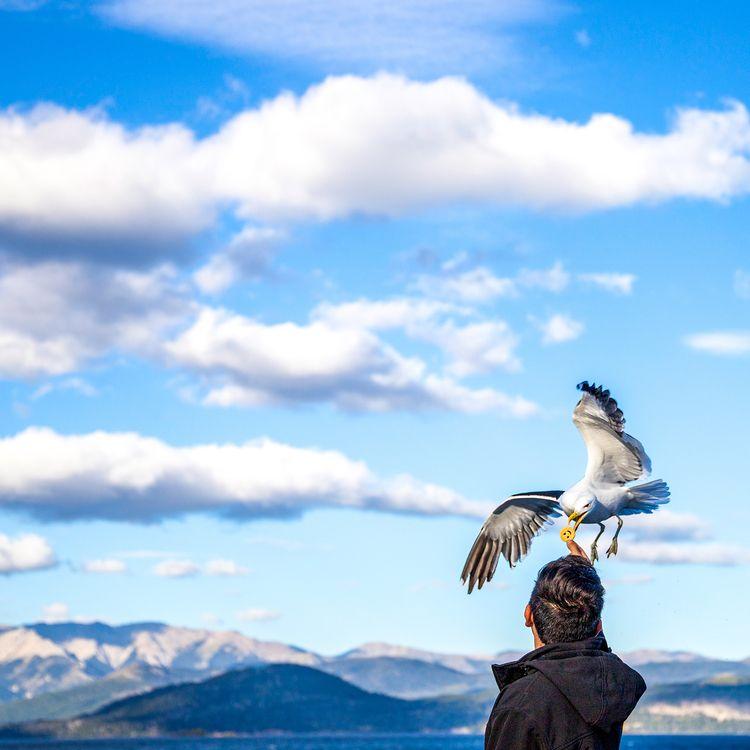 Seagull grabbing smiley cookie  - sandercrombach   ello