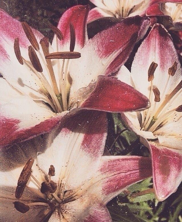 Vintage flowers Front sides Pho - sovanbrigati | ello