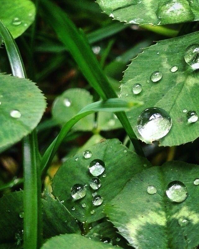 autumnal rain - libedlulo | ello