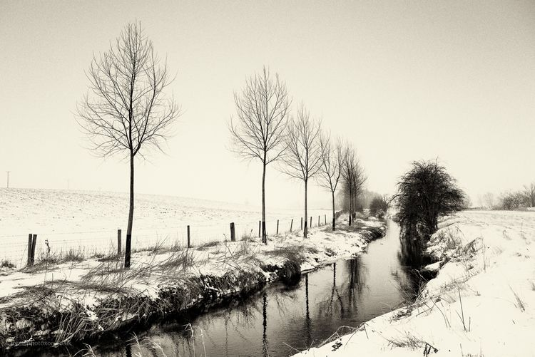 Mill stream - snow, river, trees - toni_ertl | ello