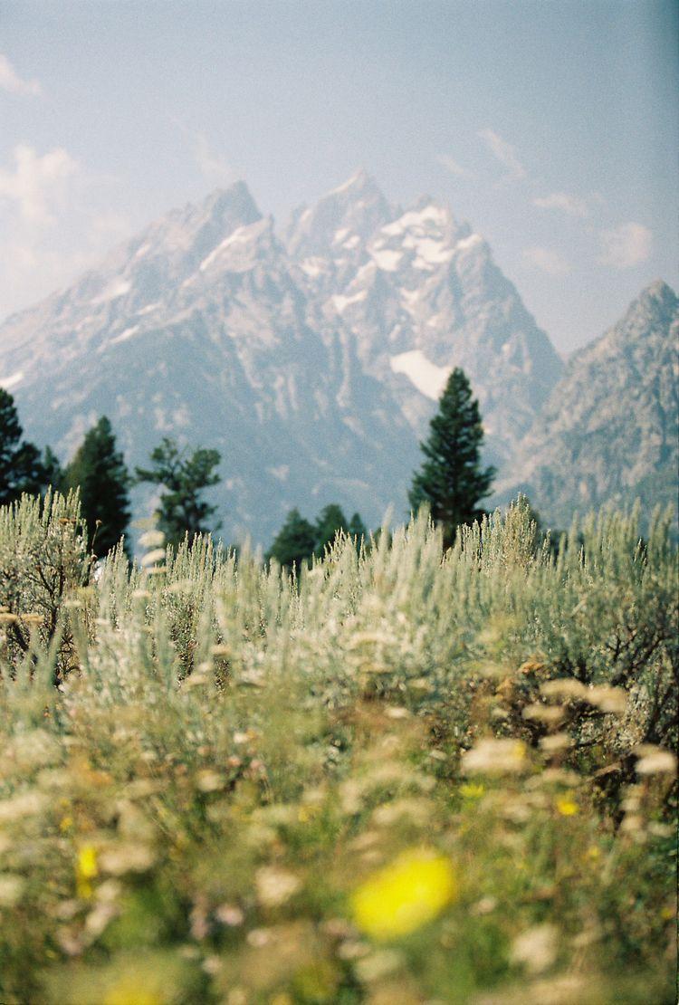 Grand Teton National Park - 35mmfilm - natalieallenco | ello