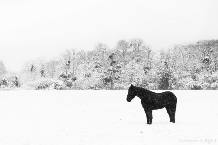 Le petit cheval dans le mauvais - christophen | ello