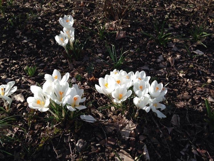 Spring - sylviajacob | ello