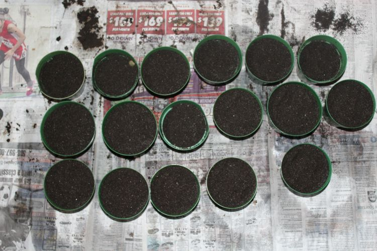 time season start planting seed - ejfern28 | ello