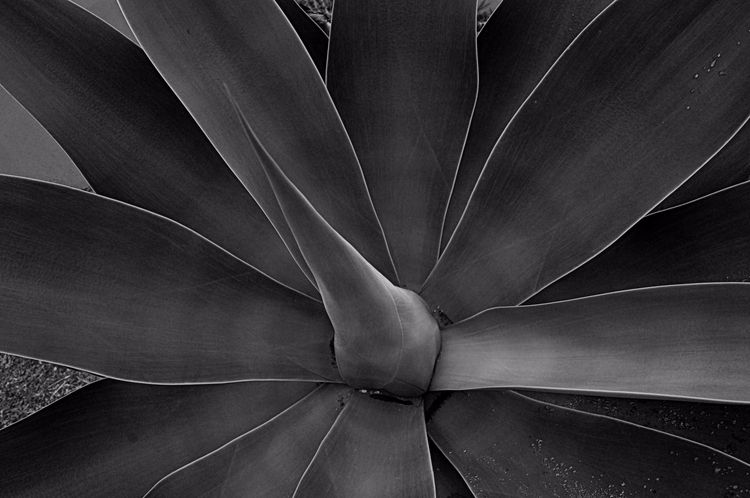 Folhagem - flora, folha, plant, botanic - jsuassuna | ello