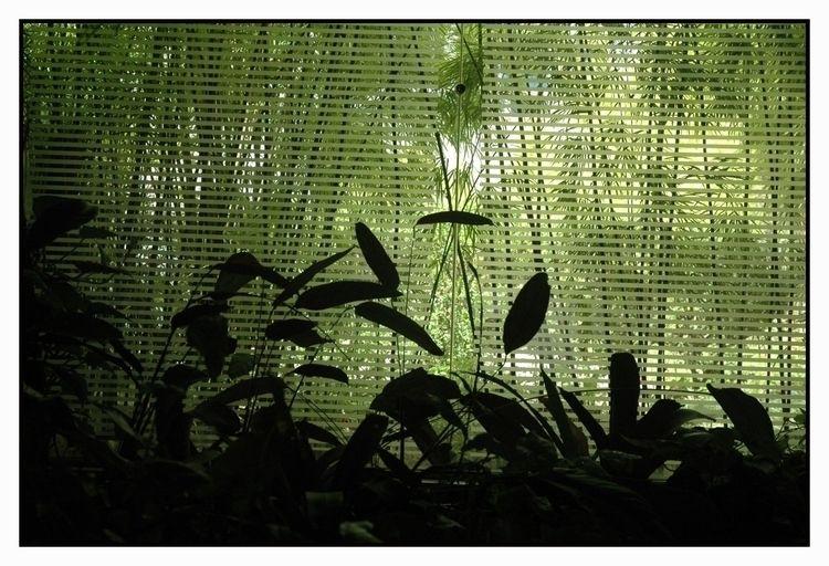 green - reflection, glass, abstract - jsuassuna | ello