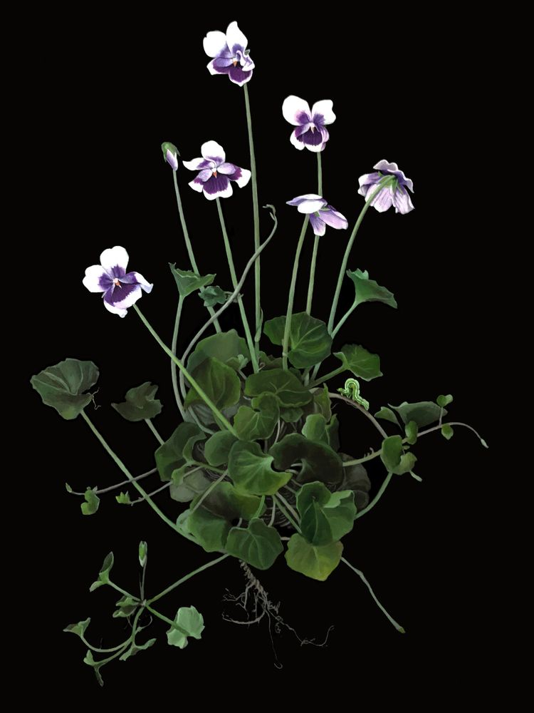 Violets - 30x40 Acrylic canvas  - brookefischer | ello