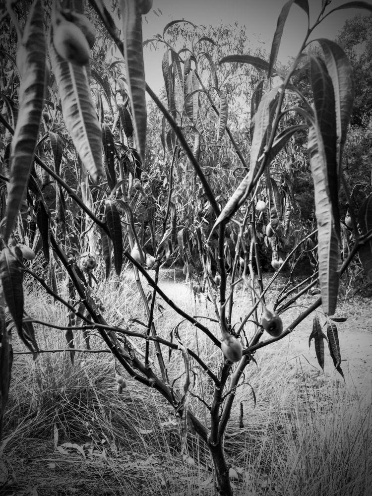 Everlasting evergreen - sacrecour | ello