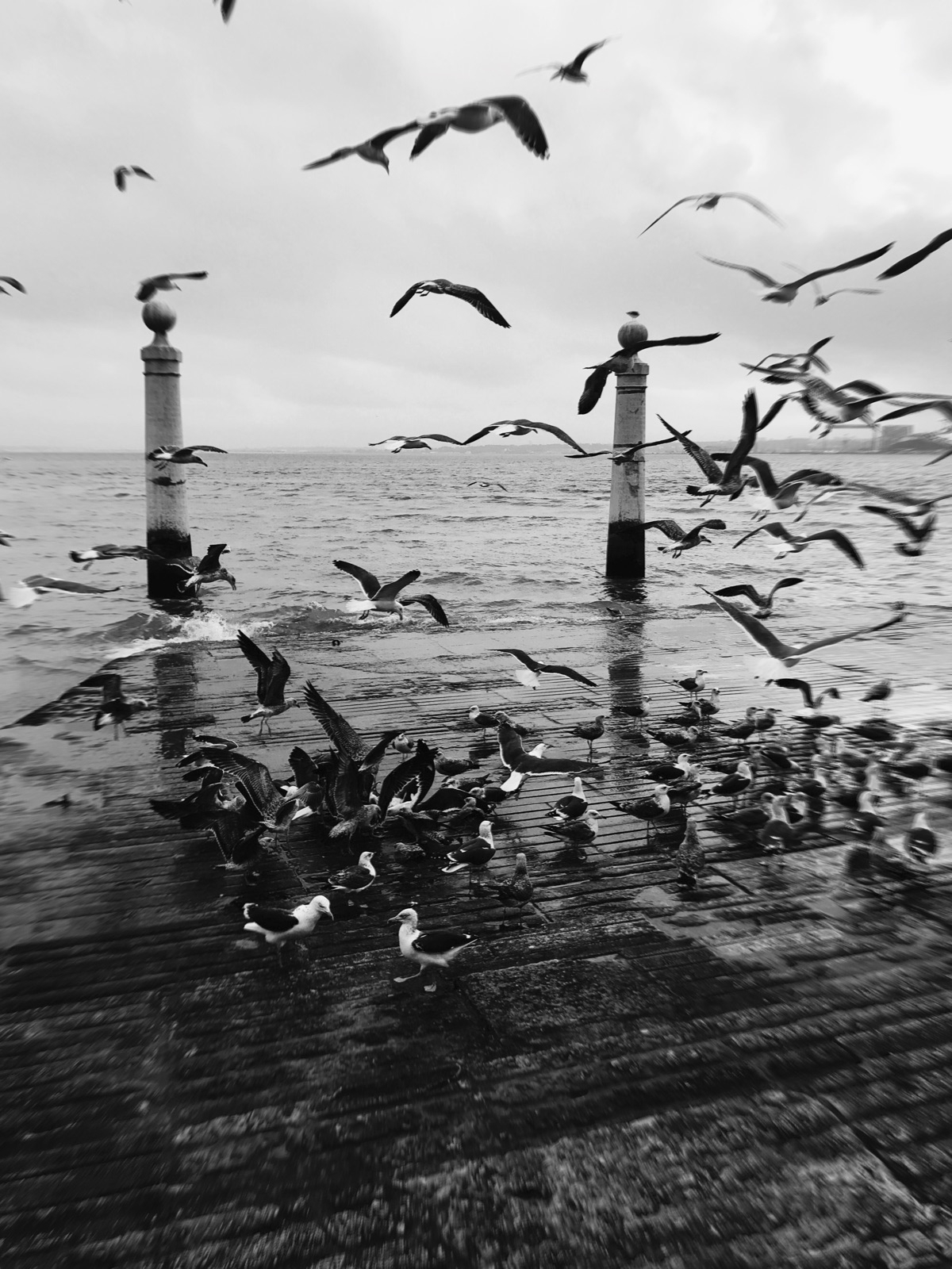 Portugal, lisboa, tejo, seagulls - joanacomeapapa | ello