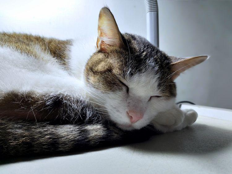 あなたの寝顔を見ることはこの世界で一番幸せなことなんだ - cat - doraemmm   ello