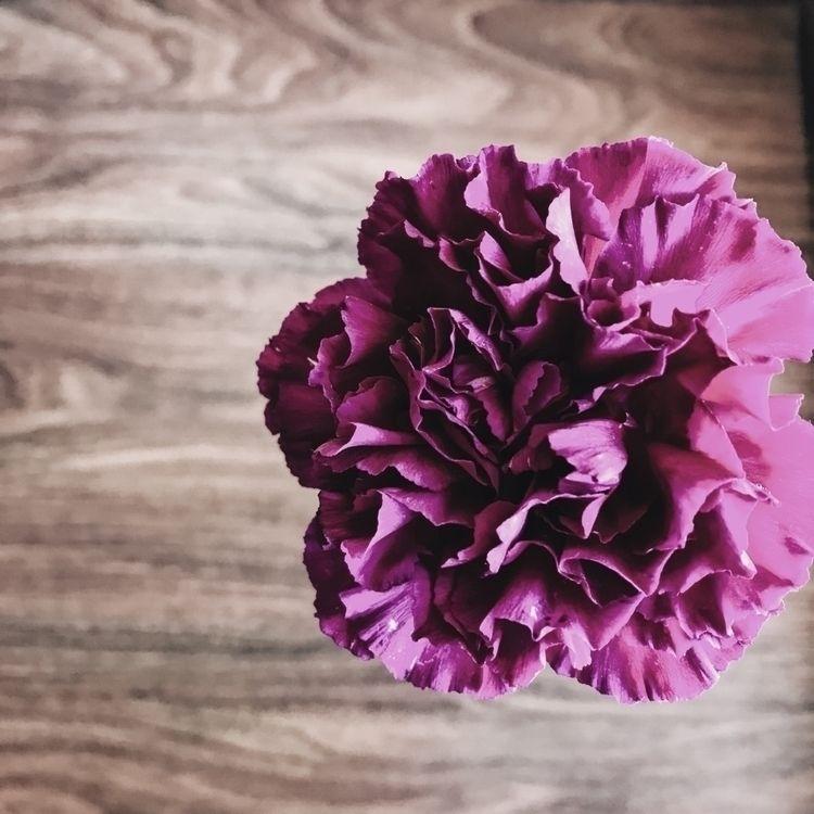 Rossssa:cherry_blossom:  - flower - caos_ | ello