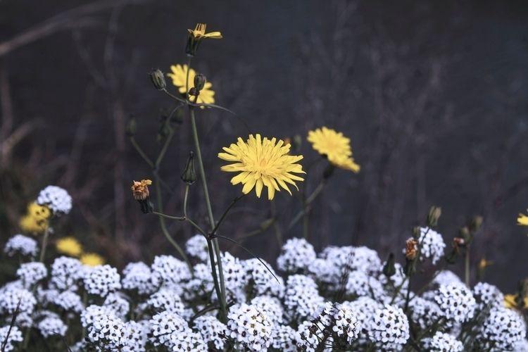 Lovely flowers - photography, photographer - albxc | ello
