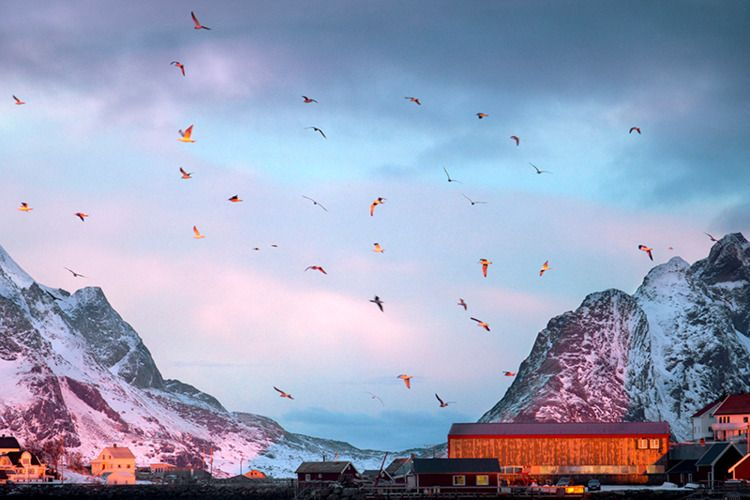 Polar Warmth II series Maya Bea - inag | ello