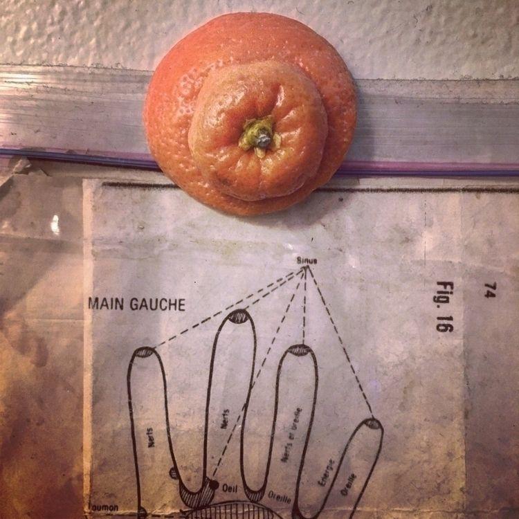 Anatomy | Roland Bastien - curation - rbastien | ello