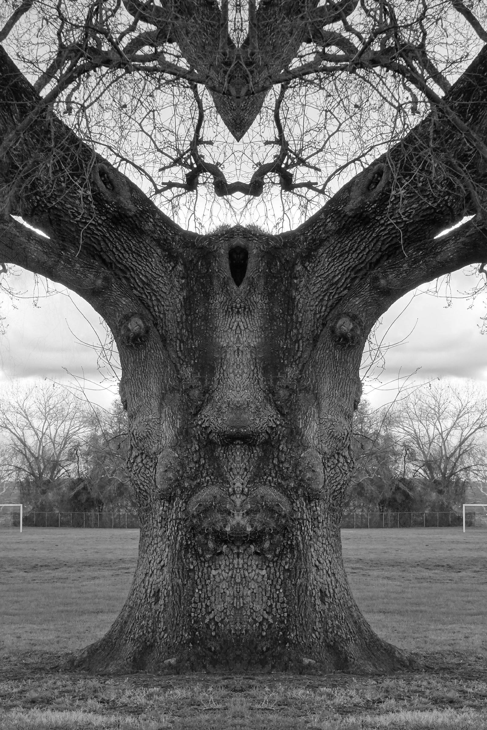 Oak school playground...#nature - zygzwurx   ello