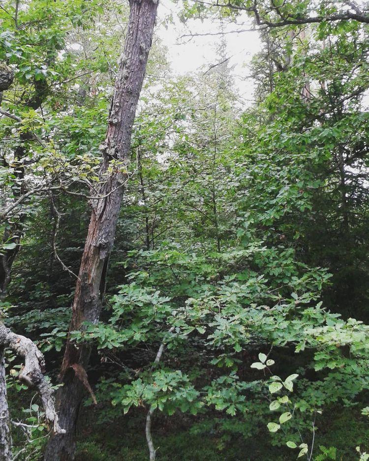 Något vildare del av Griftegård - skogskyrkogardar | ello