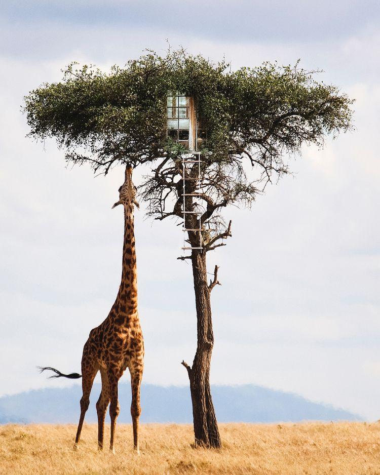 Tree House - art, photography, surreal - jstnptrs | ello